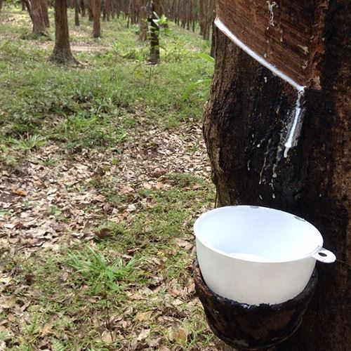 NIA supports PSU to bring Nano Coating innovation to rubber